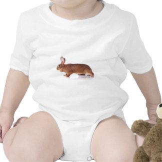 rabbit babador