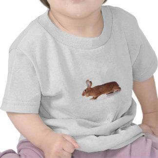 rabbit tshirts