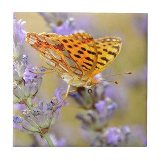Rainha da borboleta de Fritillari da espanha na Azulejos