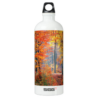 Raios de sol coloridos bonitos da floresta do garrafa d'água