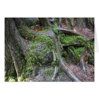 Raizes da árvore no cartão da floresta
