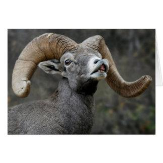 Ram do Bighorn do deserto Cartão Comemorativo