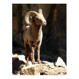 Ram dos carneiros de Bighorn perto das rochas em Cartão Postal
