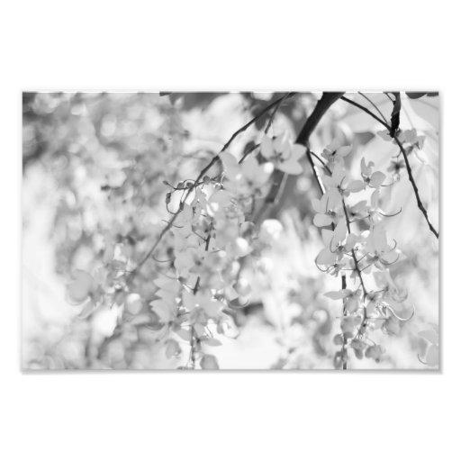 Ramo preto e branco da flor impressão fotográficas