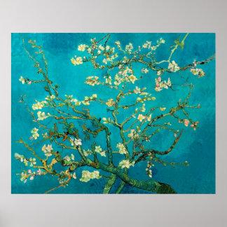 Ramos de árvore de florescência da amêndoa de Vinc Posters