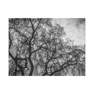 Ramos de árvore no impressão preto e branco das