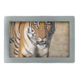 Rapina de desengaço do Tigress fêmea