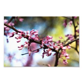 Rapsódia do primavera impressão de foto