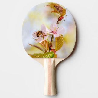Raquete De Ping-pong Abelha em uma flor da cereja