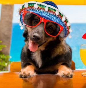 Equipamento de Ping-pong Cão óculos Sol   Zazzle.com.br f96ae5fae6