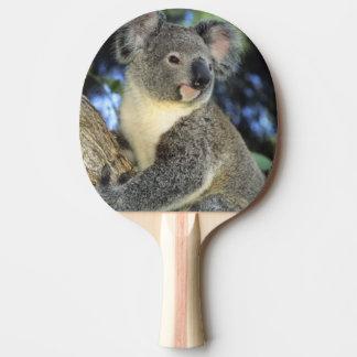 Raquete De Ping-pong Cinereus do Koala, do Phascolarctos), Austrália,