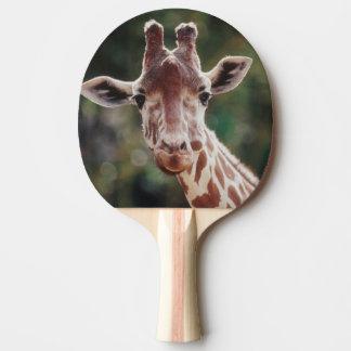 Raquete De Ping-pong Feche acima do girafa Reticulated