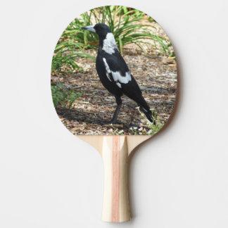 Raquete De Ping Pong Pá de Pong do sibilo do Magpie australiano