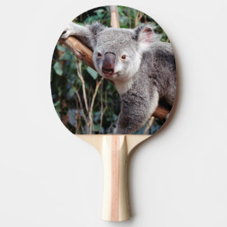 Raquete De Ping Pong Parque dos animais selvagens de Featherdale, ursos