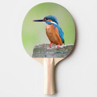 Raquete De Ping Pong Pássaro do martinho pescatore