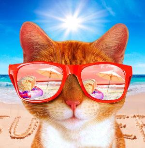 179b2199e15be Raquete De Ping Pong Summercat com óculos de sol - gato dos óculos de