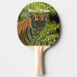 Raquete De Ping-pong Tigre coreano sul