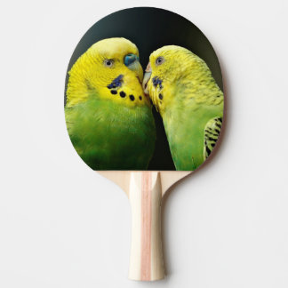 Raquete De Tênis De Mesa Beijando o pássaro do papagaio de Budgie