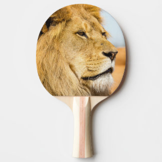 Raquete Para Ping-pong Leão grande que olha longe