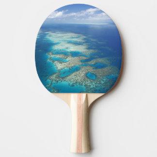 Raquete Para Ping Pong Recife da língua, parque marinho do grande recife