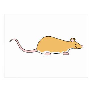 Rato do animal de estimação. Canela Berkshire, Cartão Postal