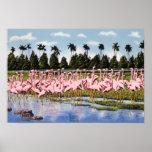 Rebanho de Florida dos flamingos corais Poster