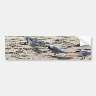 Rebanho de pássaros Cáspios da andorinha-do-mar Adesivo Para Carro