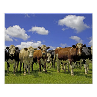 Rebanho do gado e do céu nublado pôster