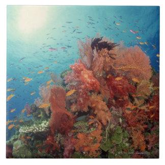 Recife cénico de corais duros, corais macios 2