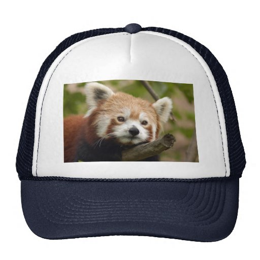 red-panda-013 bonés