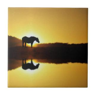 Reflexão do nascer do sol do cavalo no azulejo da