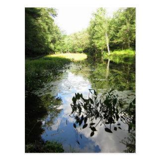 Reflexões do pântano cartão postal