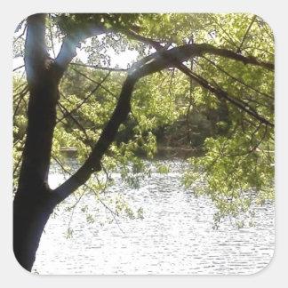 Reflexões nas madeiras adesivo quadrado