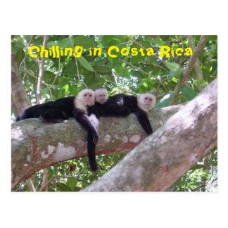 Refrigeração em Costa Rica Cartão Postal