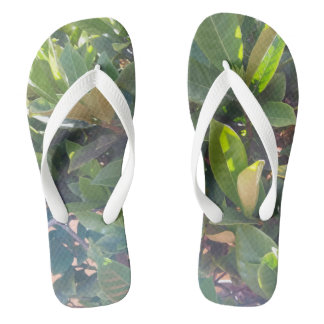 Refrigere chinelos verdes do impressão das folhas