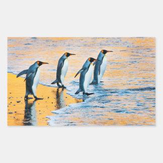 Rei pinguins no nascer do sol - etiqueta