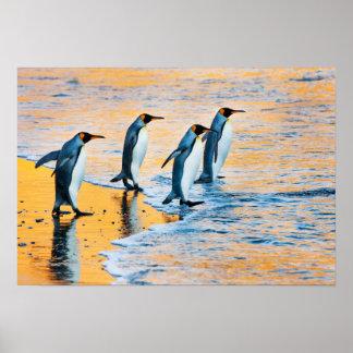 Rei pinguins no poster do nascer do sol