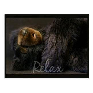 Relaxe o cartão com urso do sono