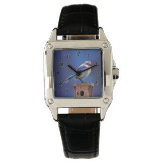 Relógio Bluebird (fêmea)