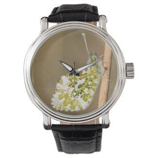 Relógio borboleta da Alaranjado-ponta