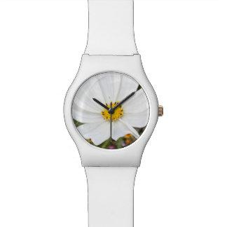Relógio branco da flor do cosmos