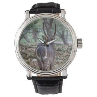 Relógio Bumbum de Waterbuck