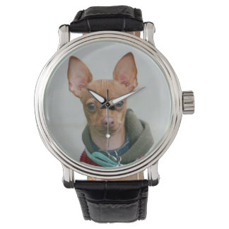 Relógio Cão da chihuahua