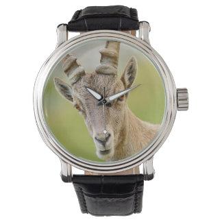 Relógio De Pulso Retrato de um íbex