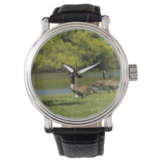 Relógio dos animais