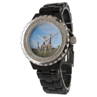 Relógio Família do girafa na cume gramínea
