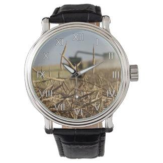 Relógio Liga da colheita de grão de Canola