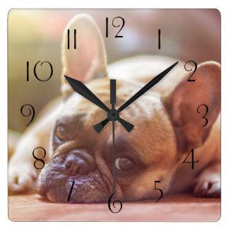 Relógio Quadrado Buldogue francês lindo que encontra-se para baixo