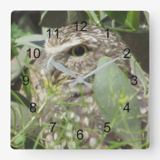 Relógio Quadrado Burrowing a coruja