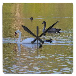 Relógio Quadrado Cisne muda e cygnet